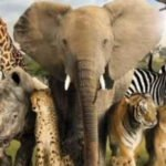 معلومات عامة مهمة ومفيدة وطريفة عن الحيوانات