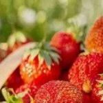 فوائد الفراولة الصحية والغذائية واضرارها الصحية للجسم
